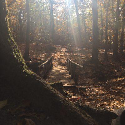 Bezield leven: je leven vanuit een boom bezien